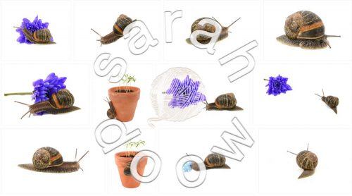Snail by Sarah Doow at Shutterstock