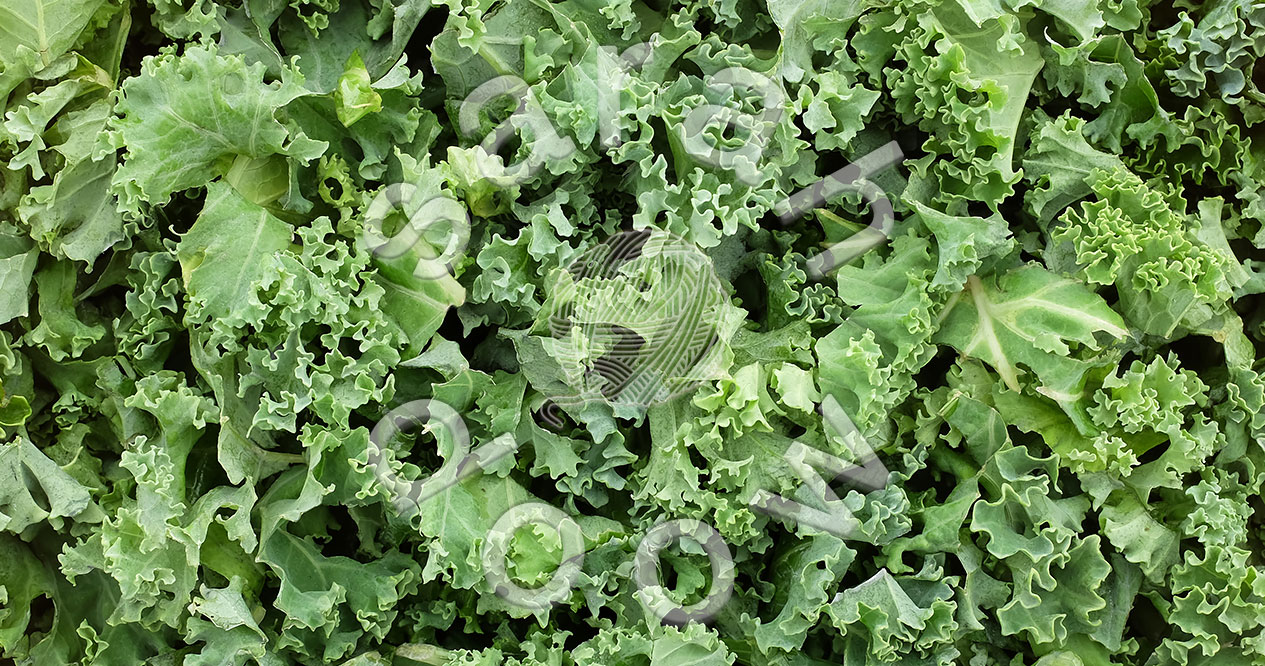 Shredded kale – collection at Society6